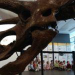 Museu de paleontologia 2018